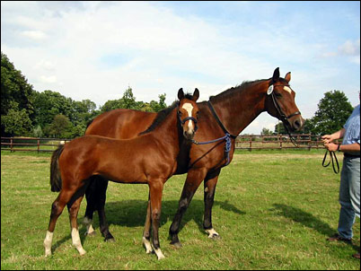 verband_pferde